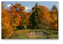 Maples on the hill